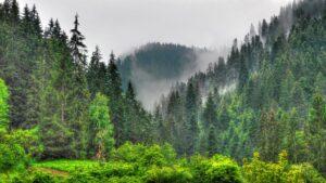 Какво влияние оказва планината върху хората? gora